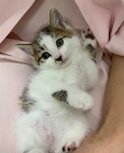生後2ヵ月の仔猫 ※里親さんが決定しました!
